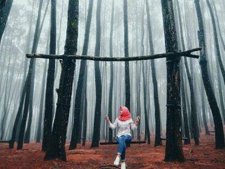Destinasi Wisata Alam Hutan Pinus Imogiri