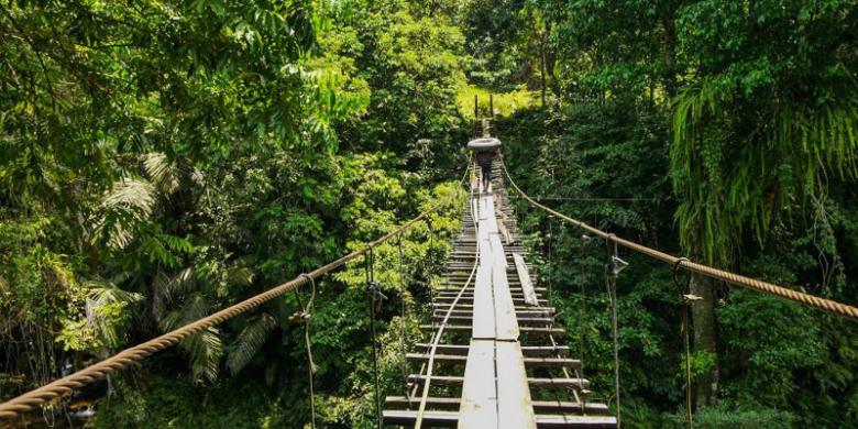 Keindahan Wisata Tangkahan Sumatera Utara