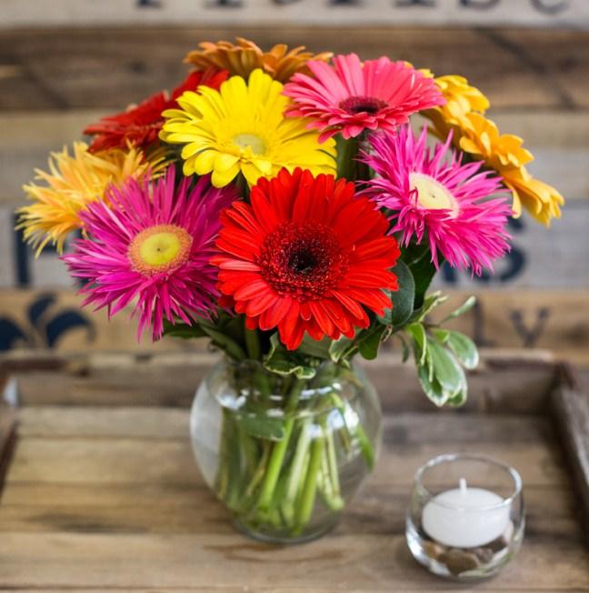 Tanaman Hias Penyerap Racun Sang Bunga Gerbera