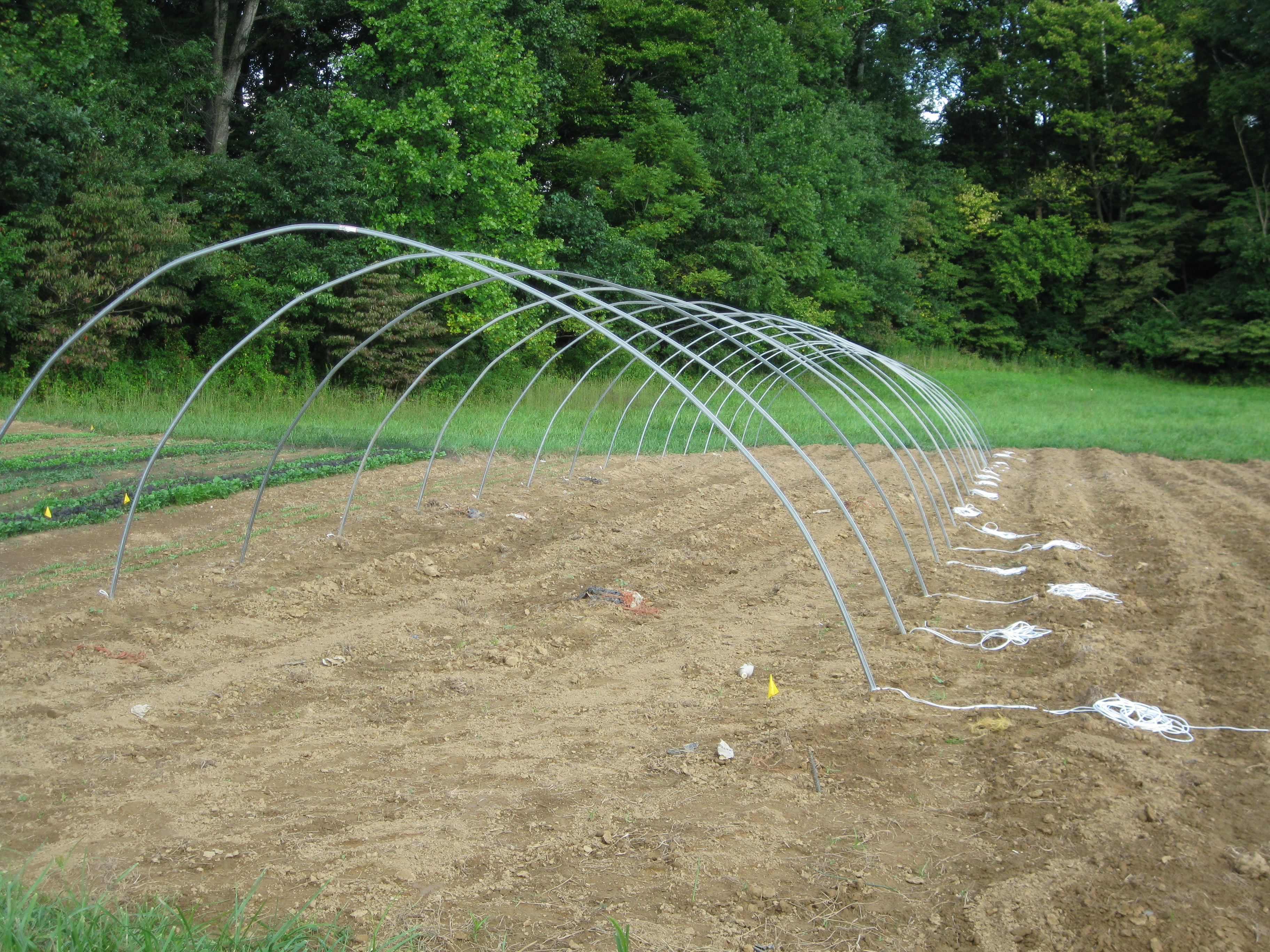 Hoop House Continues