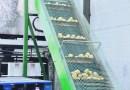 Przykłady maszyn spożywczych które wspomagają produkcję
