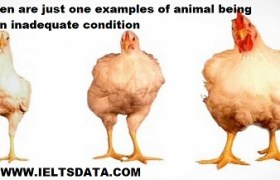 Chicken are just one examples of animal being kept in inadequate condition for the benefits of human beings.Write an essay for a university teacher or the following topic?