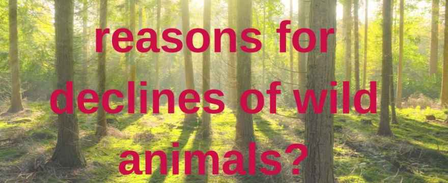 What are the reasons for declines of wild animals