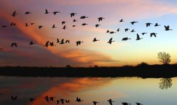 Migrating Birds: IELTS Synonyms Practice
