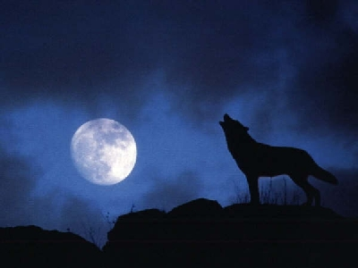 lobo-y-luna