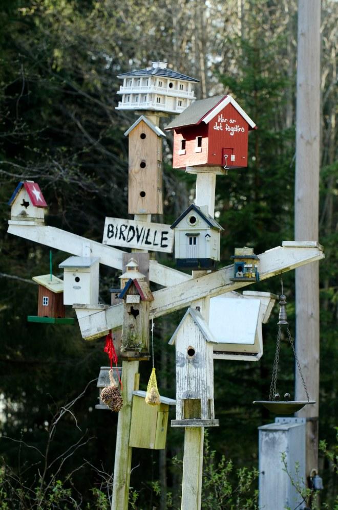 birdville