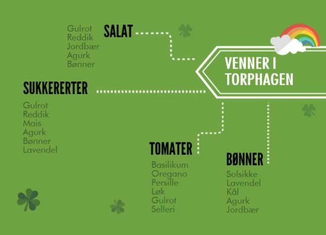 En liten guide til hvilke grønnsaker som er venner i hagen. Utvalget er større enn dette, men her er noen av de vanligste vekstene i grønnsakshagen og en oversikt over hvem som liker hverandre.