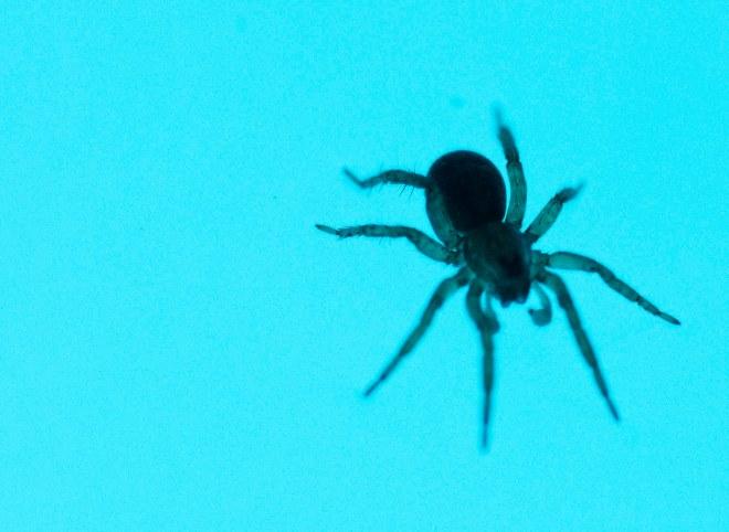 En liten venn i vannet. Men ikke nå jeg bader,