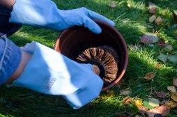 En krukkebørste gjør vaskingen av blomsterpottene litt enklere.