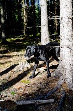 Mens andre jobber, får noen pølseløype i skogen...