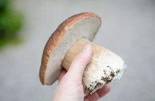 En prikkfri og deilig perfekt steinsopp! Steinsoppen kjenner du lett igjen, og utseendemessig kan den ikke forveksles med giftige sopper. Den kan riktignok forveksles med gallerørsoppen som er uspiselig (men altså ikke giftig). Se etter kjennetegnet til steinsoppen; hatten som ser ut som en stekt brødskorpe, og etter stilken som er skikkelig tykk.