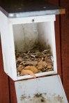 Fugler legger ikke egg i gamle reir, og dersom kassene ikke tømmes, blir de etterhvert fulle.