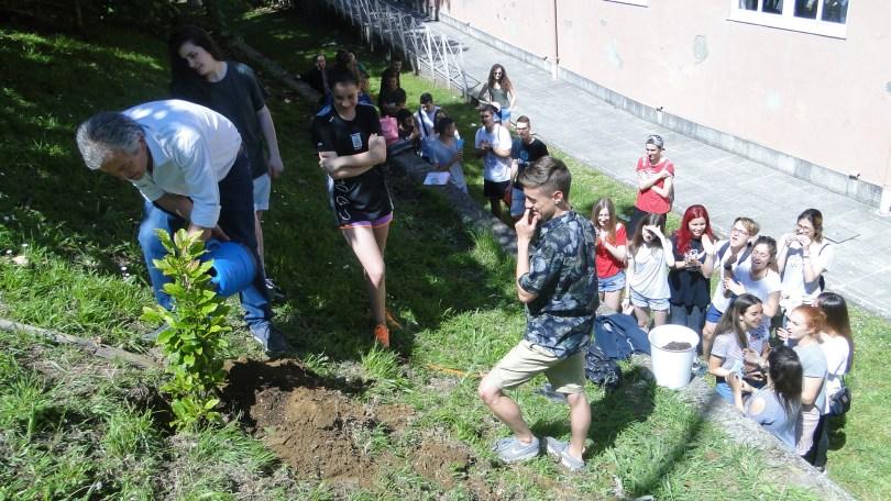 Plantación dunha árbore