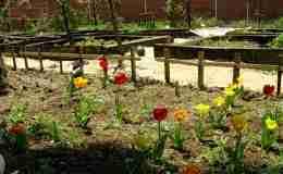 huerto escolar con flores