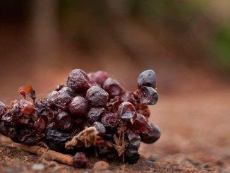 Правительство Канар и вино