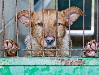 Столица Тенерифе будет жестко штрафовать за оставление животных