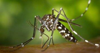 Энтомологическая система наблюдения Канарских островов обнаруживает присутствие комара Aedes aegypti
