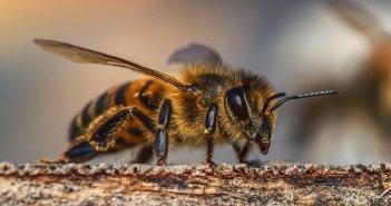 """Коллегия врачей заявила на канарского целителя, который """"лечил"""" своих пациентов пчелиным ядом"""