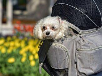 Аэрофлот меняет правила перевозки животных