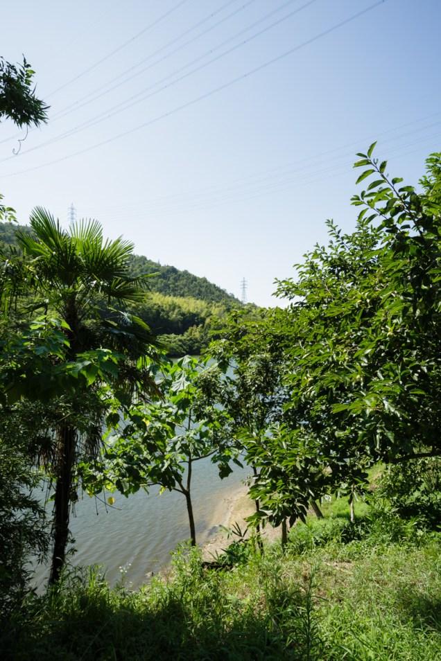 これが森池です