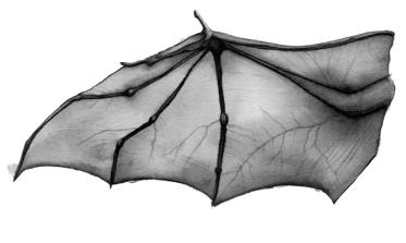 bat_wings