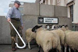 The right to drive sheep across London Bridge - once London's only bridge across the River Thames - dates back several hundred years