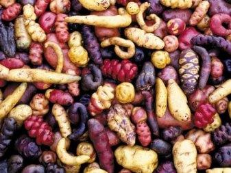 البطاطس - Ifarasha