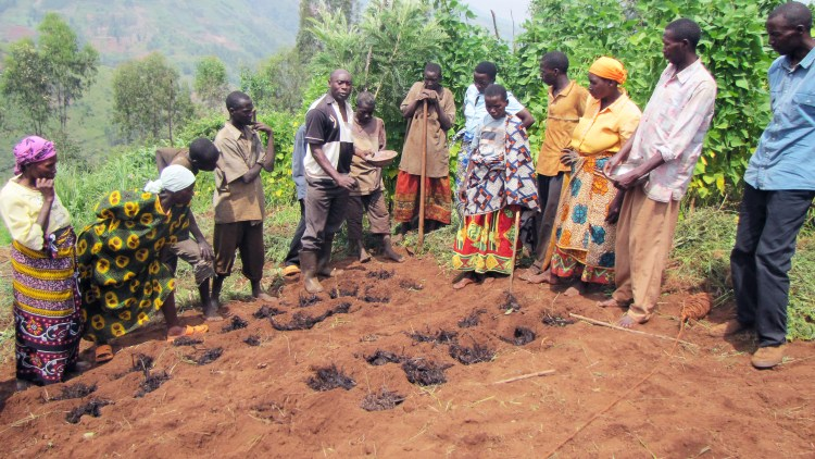farmers-in-burundi-learn-isfm-techniques