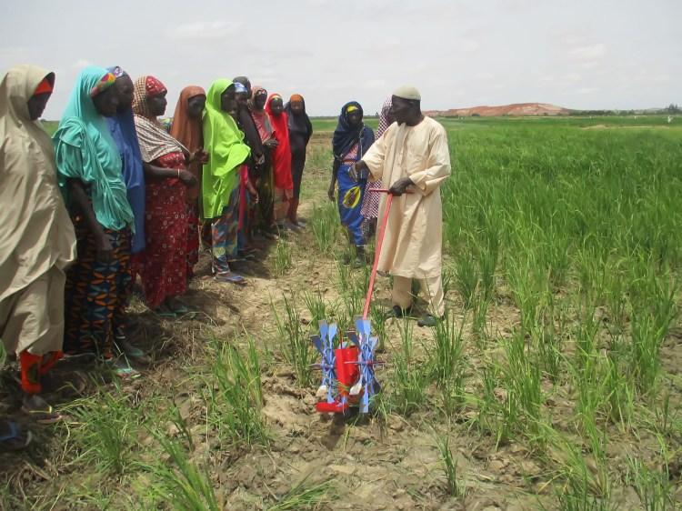 Labbo Aliyu Nigeria Rice.JPG