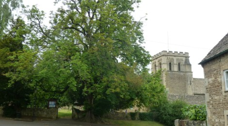 The Horse Chestnut tree from the north