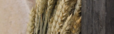 SERMON: The Parable of the Weeds among the Wheat
