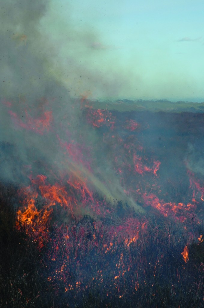 Responding to wildfire risk in Northumberland UK_IFF Magazine_MDM Publishing (3)