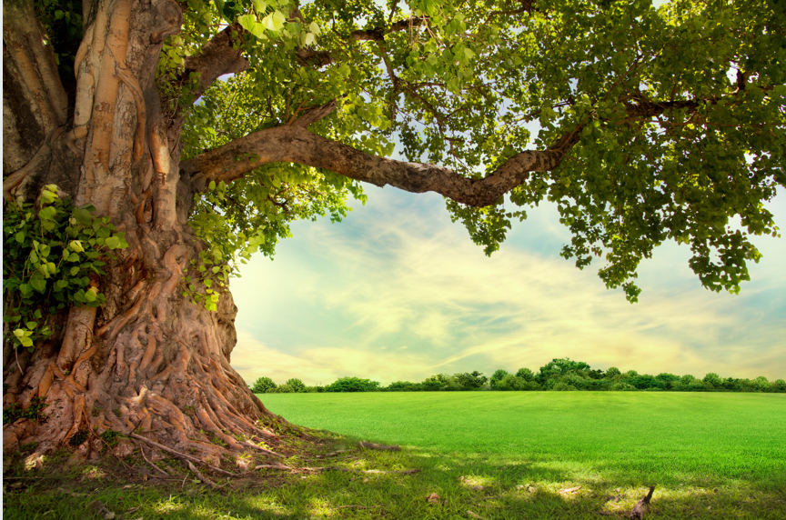 Tu B'shvat and the Tree of life