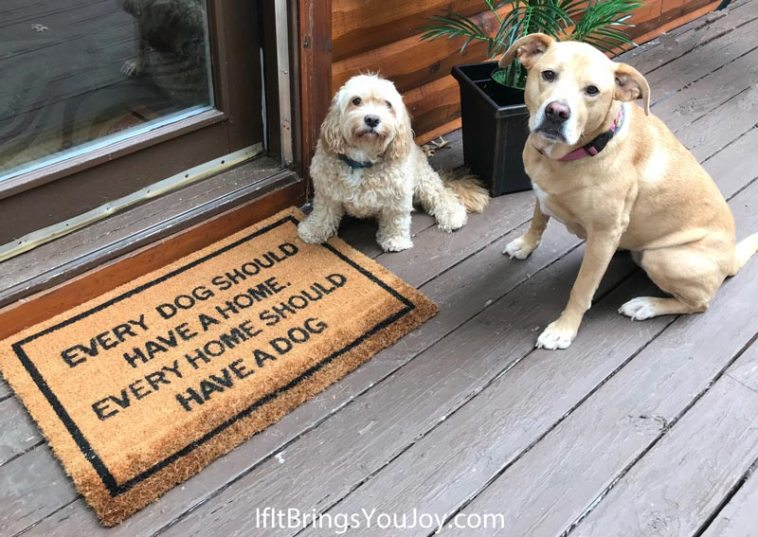 Dogs by the Every Home Should Have a Dog doormat