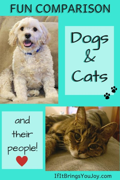 Join the fun look at the personality traits that distinguish dogs from cats. If you don't already know, find out if you're more of a cat person or dog person. #dogs #cats #pets
