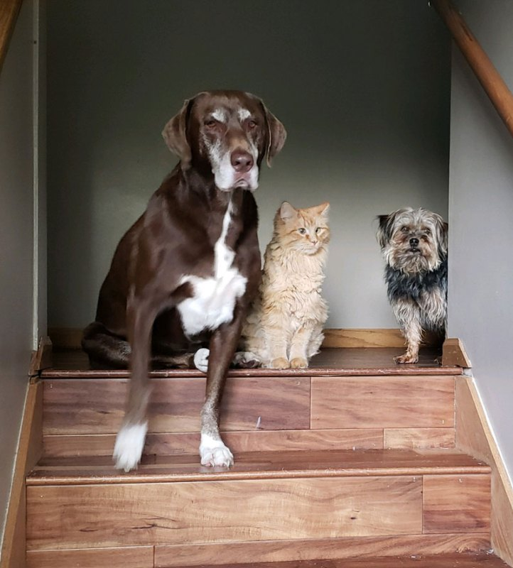 Dogs and cat sad to see owner leave the house
