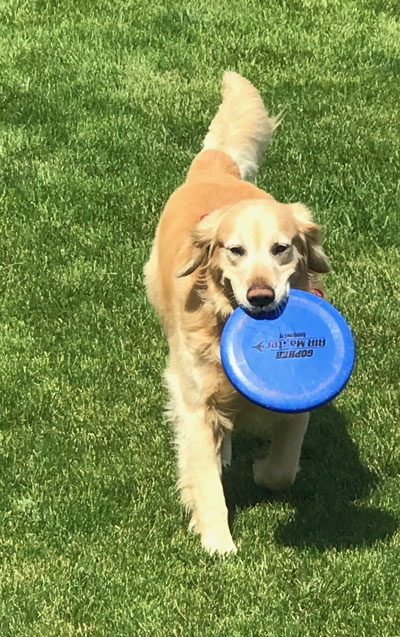 Dogs love to play fetch! Physical activity is just one of the many ways to care for your dog. Tips to care for your dog. #dogs