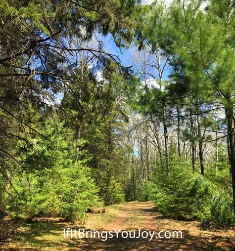 Beautiful path in nature