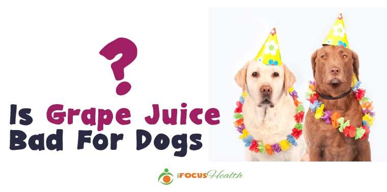 grape juice for dogs