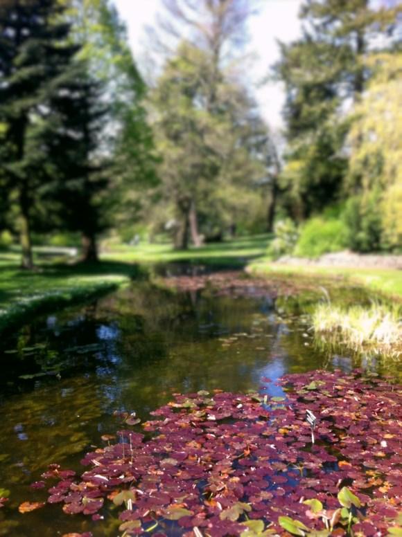 Botanical Gardens 8_edited