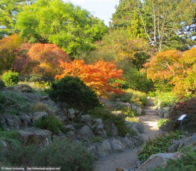 Colourful trees in the rockery