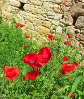 Wild flowers near ancient ruins