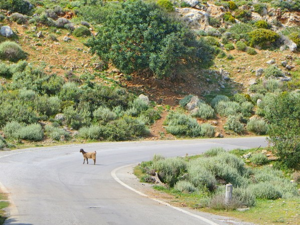Roads were empty except for the odd animal.