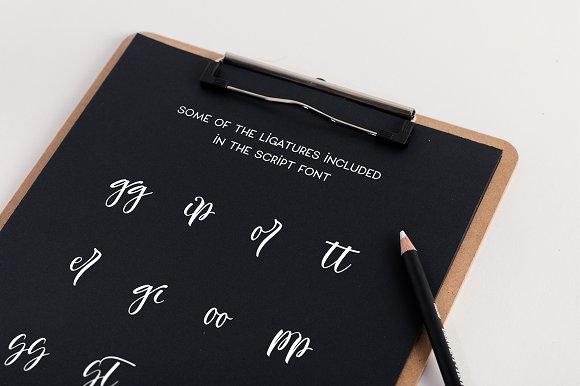 Monstera Deliciosa Font Duo