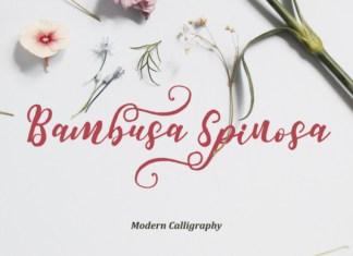 Bambusa Spinosa Font