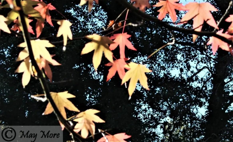 October ~ My Blogging Summary & SoSS