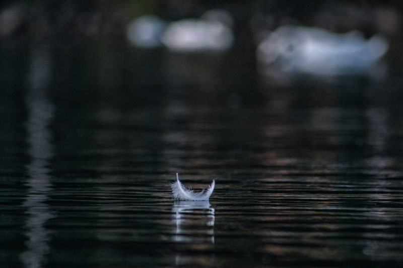 white-feather-on-water