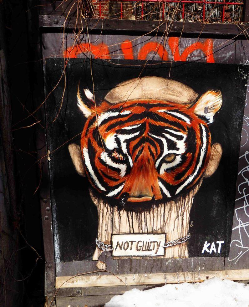Kat - Plateau (6) Tigre