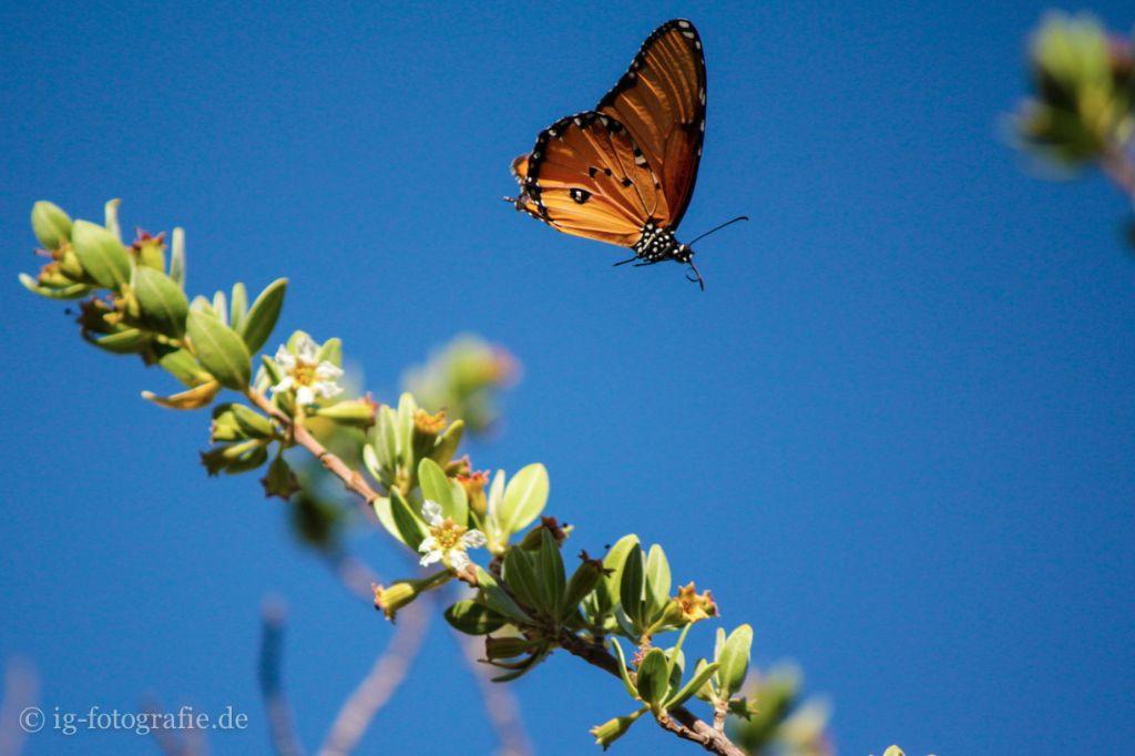 Etwas neues ausprobieren: Schmetterlinge fotografieren