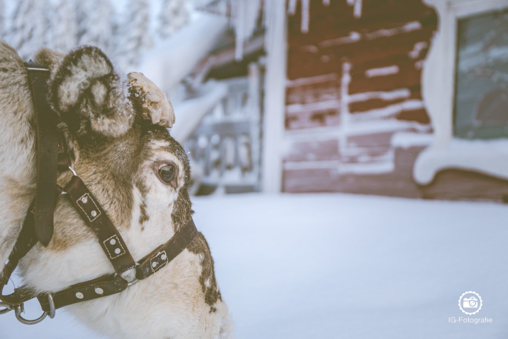 lappland-reisen-fotografieren-7